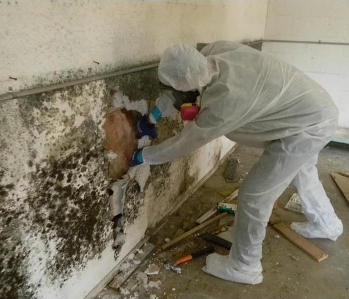 Mold Remediation Tips on How to Prevent Mold